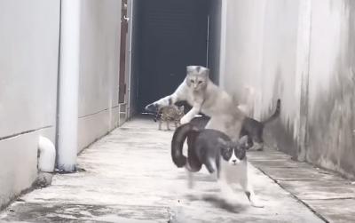 agilità gatti