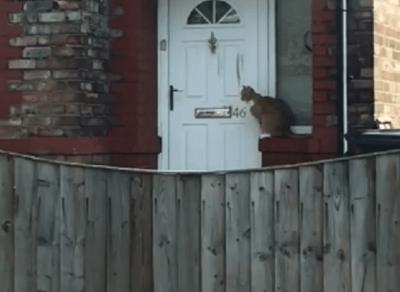 gatto educato