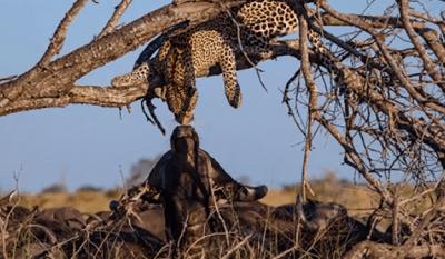 amicizie animali
