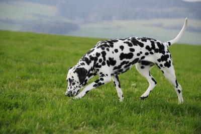 educare cane
