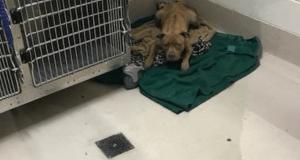 madre separata dai cuccioli