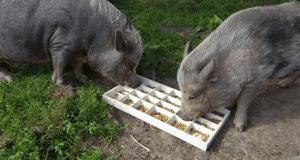 animali amicizia