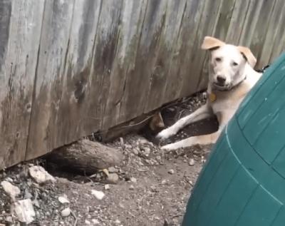 amicizia cani