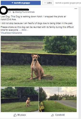 soccorsi animali catastrofi