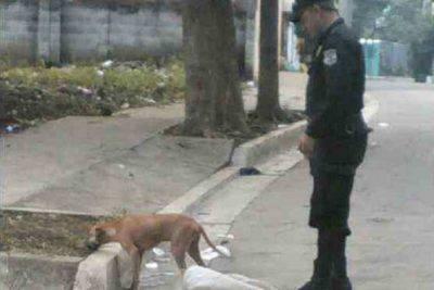 cane legato