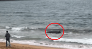 soccorso balene