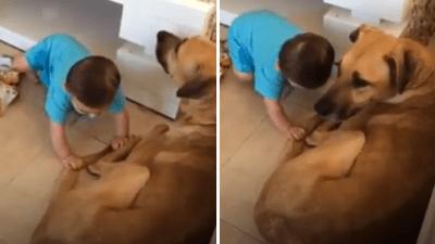 cane aggressivi bambini