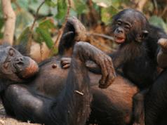 maternità primati