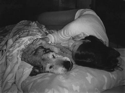 adozione cane anziano
