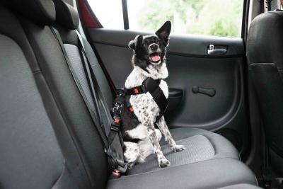 sicurezza cane auto
