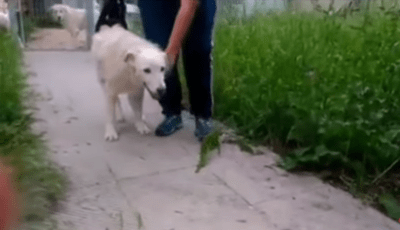 cane lanciato dal ponte