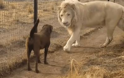 amicizia animali