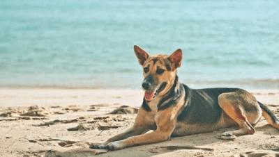 estate cani