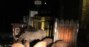 habitat animali