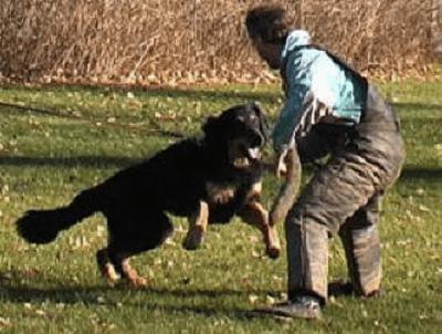addestrare cane da difesa