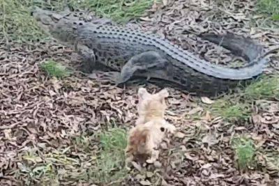 cane mangiato coccodrillo
