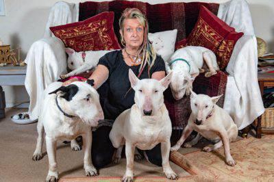 Liz Haslam Bull Terrier