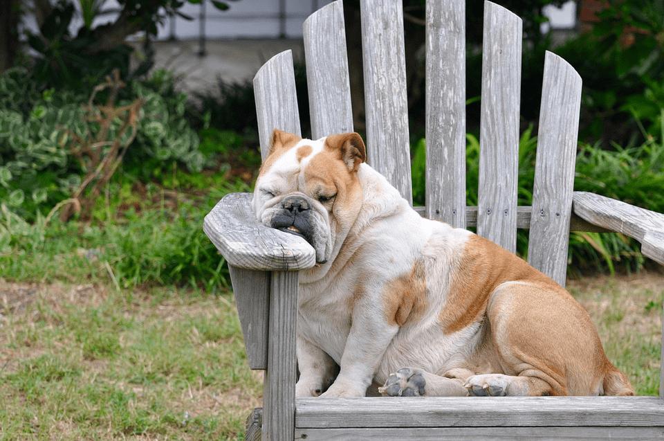 sordità cane