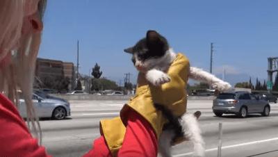 soccorso animali strada