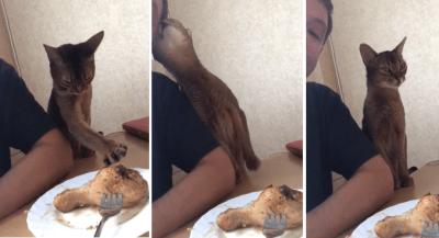 gatti ruffiani