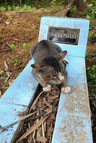 gatti padroni
