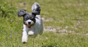 allegria cani