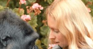 gorilla lingua segni