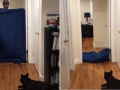 giochi con cani
