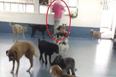 rifugio cani