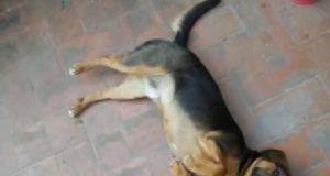 cane ucciso