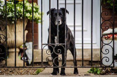 addestrare il cane a non uscire dal cancello