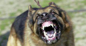 cane aggredisce bambino