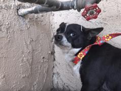 abbandono cani