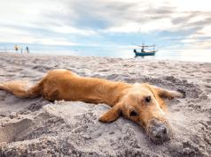 cane spiaggia mare