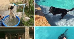 cani acqua