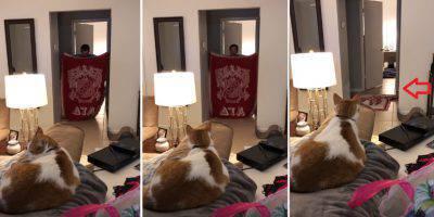 gatti curiosi