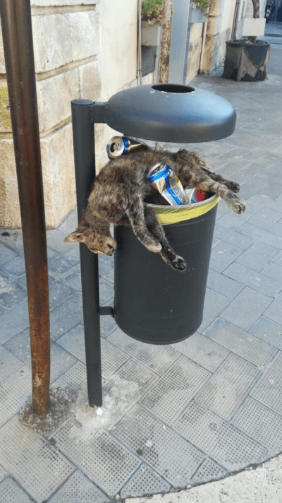 omesso soccorso animali