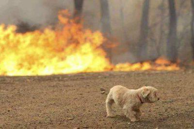 Inferno di fiamme in Grecia, Tsipras dichiara 3 giorni di lutto