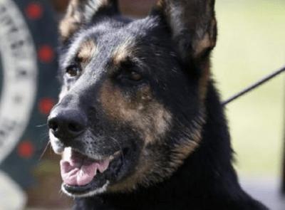 cani polizia