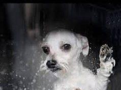 cane lavatrice