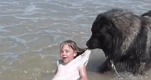 cani da soccorso