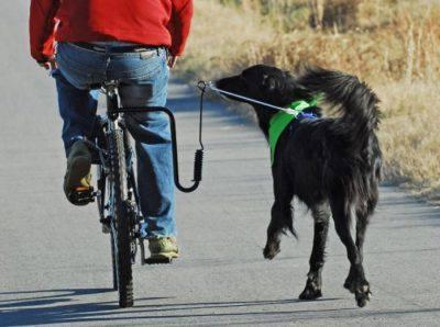 guinzaglio per cani