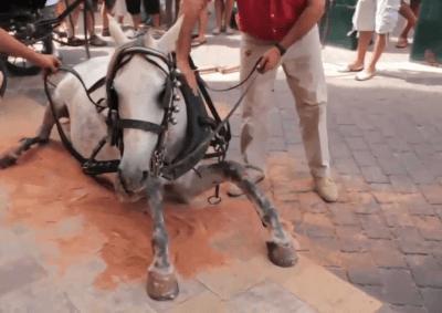 sfruttamento cavalli