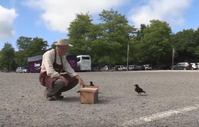 animali collaborazione