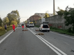 incidenti stradali animali