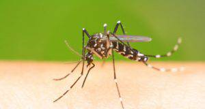 punture di zanzare nel cane