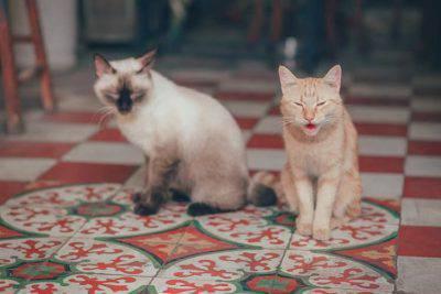 gatti casa