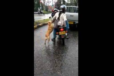 abbandono di animali cane