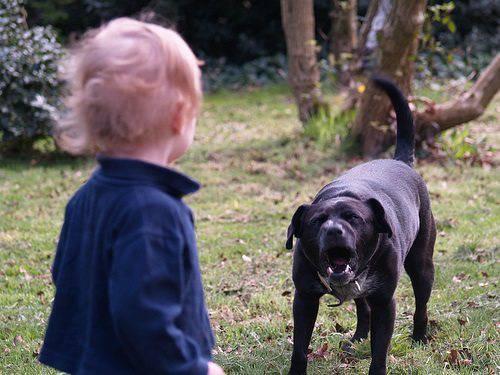 aggressioni cani
