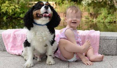 cane salva bambina
